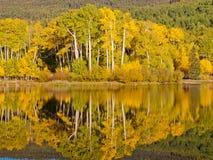Perfekt reflexion Fotografering för Bildbyråer