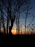 Perfekt solnedgång till och med träden Royaltyfri Bild
