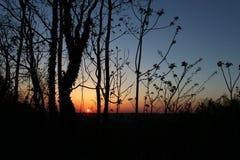 Perfekt solnedgång till och med träden Arkivbild
