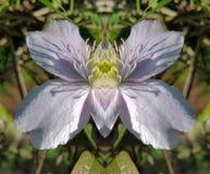 perfekt symmetri Royaltyfri Bild