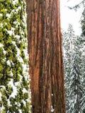 Perfekt träd och mossa för bild royaltyfri foto