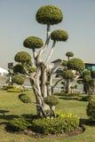 perfekt tree Arkivbilder