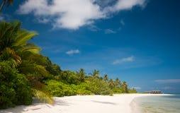 perfekt tropiskt för strand Arkivfoto