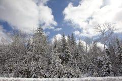 perfekt vinter för dag Arkivbilder