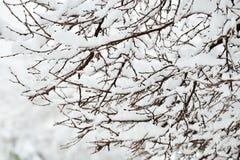 perfekt vinter för dag Royaltyfri Bild