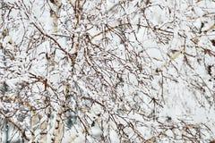 perfekt vinter för dag Arkivfoto