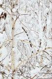 perfekt vinter för dag Arkivfoton