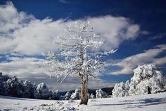 perfekt vinter för dag Arkivbild