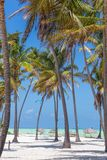 Perfekt vit sandig strand med palmträd, Paje, Zanzibar, Tanzania Arkivbilder