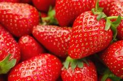 Perfekta mogna jordgubbar stänger sig upp fotografering för bildbyråer