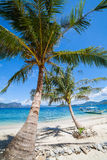 Perfekta Palm Beach Arkivfoto