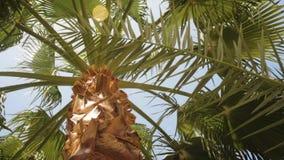 Perfekta palmträd mot en härlig blå himmel stock video
