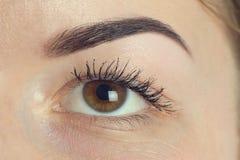 Perfekte Form des ausdrucksvollen bedeutenden Auges der Augenbraue Stockfotos
