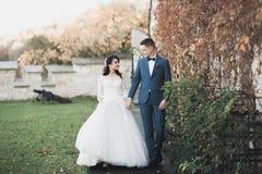 Perfekte Paarbraut, Br?utigam, der in ihrem Hochzeitstag aufwirft und k?sst lizenzfreies stockfoto