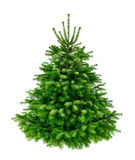 Perfekter üppiger Tannenbaum auf Reinweiß Stockfotos