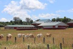 Perfekter Bauernhof mit Vieh Stockfotos