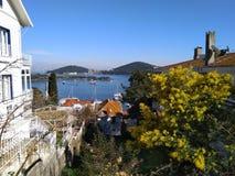 Perfekter Feiertagsansichthügel zum Meer, zur Insel und zu blühenden Bäumen stockfotos