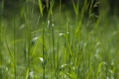 Perfekter grüner Hintergrund durch das frische Gras lizenzfreie stockfotos