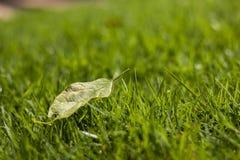 Perfekter grüner Hintergrund durch das frische Gras Lizenzfreies Stockbild