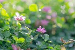 Perfekter grüner Hintergrund durch das frische Gras Weichzeichnung und blurr stockfoto