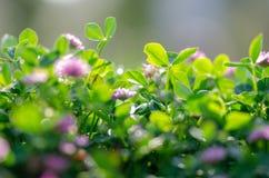 Perfekter grüner Hintergrund durch das frische Gras Weichzeichnung und blurr lizenzfreies stockfoto