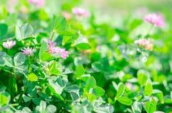 Perfekter grüner Hintergrund durch das frische Gras Weichzeichnung und blurr stockbilder