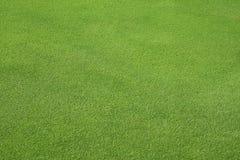 Perfekter grüner Rasen Lizenzfreie Stockfotografie