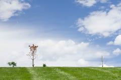 Perfekter Naturhintergrund im Freien Lizenzfreies Stockbild