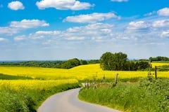 Perfekter Tag im Frühjahr, landwirtschaftliche Rapsfelder, gebogener Weg, ländliche Landschaft Lizenzfreies Stockfoto