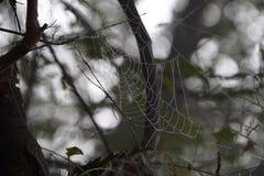 Perfektes Spiderweb Sultanpur lizenzfreie stockbilder