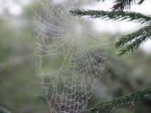 Perfektes Spinnen-Netz mit Wasser-Tropfen lizenzfreies stockfoto