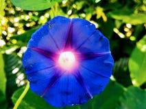 Perfezione geometrica Fotografia Stock Libera da Diritti