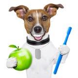 Perfezioni il cane di sorriso Fotografia Stock Libera da Diritti