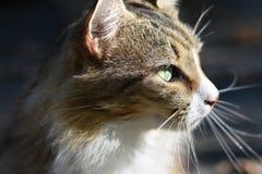 Perfil ascendente cercano del gato fotos de archivo