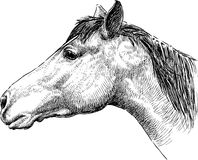 Perfil de la cabeza de caballo Imagen de archivo libre de regalías