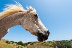 Perfil de la cabeza de caballo blanco en campo de la ladera Fotos de archivo