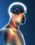 Perfil de la cabeza de la sinapsis de las neuronas del cerebro Fotografía de archivo libre de regalías