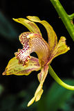Perfil de la orquídea Imágenes de archivo libres de regalías