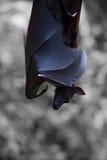 Perfil de um caçador noturno imagem de stock