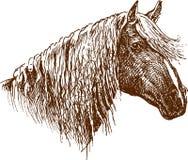 Perfil de um cavalo ilustração stock