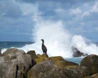 Perfil de um pássaro do oceano Fotografia de Stock