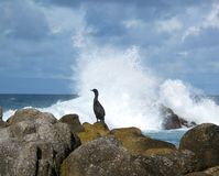 Perfil de un pájaro del océano Fotografía de archivo