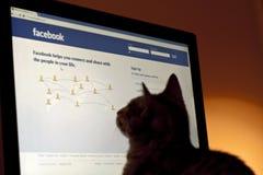 Perfil del animal doméstico en Facebook Foto de archivo libre de regalías