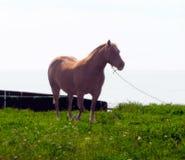 Perfil del caballo Imagen de archivo