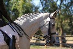 Perfil del caballo de la doma Fotografía de archivo