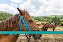 Perfil del caballo marrón Imagen de archivo libre de regalías