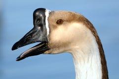 Perfil del ganso Foto de archivo libre de regalías