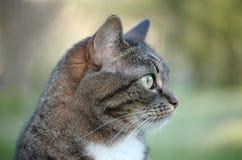 Perfil del gato Foto de archivo libre de regalías
