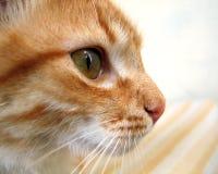 Perfil del gato Imagen de archivo libre de regalías