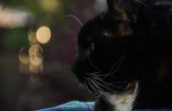 Perfil del gato negro Fotos de archivo